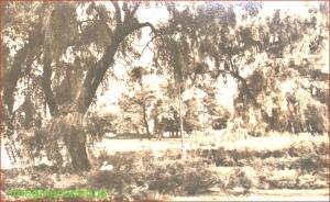 GRADINA CISMIGIU IN 1953