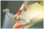 Asteptand polenul