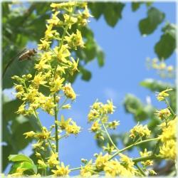 Cer, albine si flori