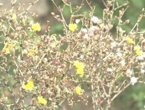 Flori, seminte si mult puf de salata