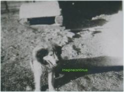 Caine in perioada interbelica, circa 1939