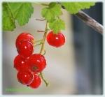 Perle rosii cu vitamine