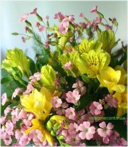 Flori galbene si roz