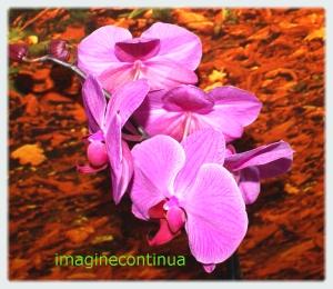 Flori de orhidee si covor de frunze moarte...