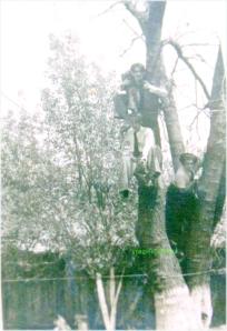 Joc de primavara, circa  1939-1940