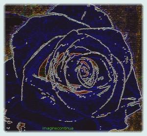 Trandafir 9