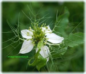Capricii florale de vara