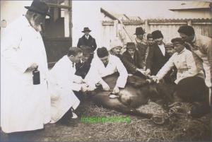Castrarea unui armasar, circa 1914.
